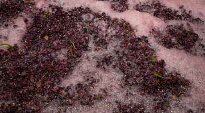 葡萄酒的制作方法