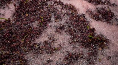 白葡萄酒和红葡萄酒的区别