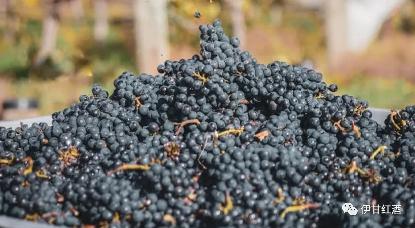 黑皮诺葡萄酒的特点