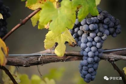 意大利葡萄酒
